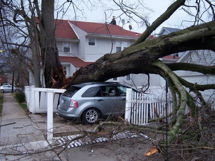 Оценена сумма ущерба от урагана в Москве