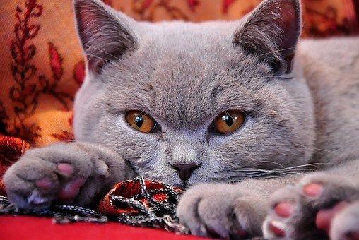 Популярные кошки у россиян