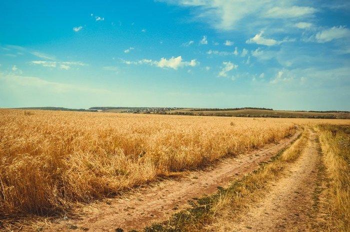 Глобальное потепление приведет к массовому голоду